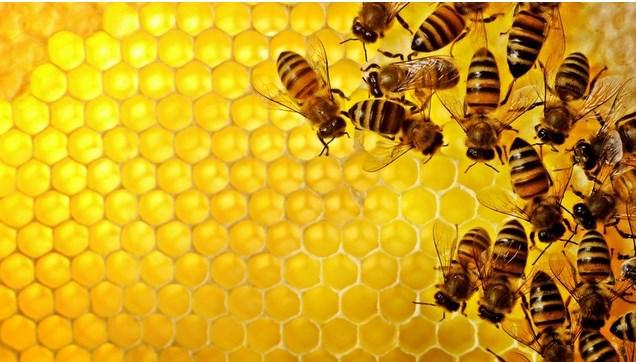 Arılar hakkında ilginç gerçek!