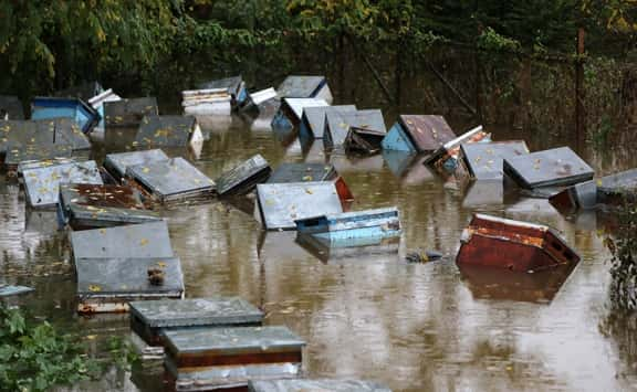 Sağanak yağış nedeniyle 150 kovan arı su altında kaldı