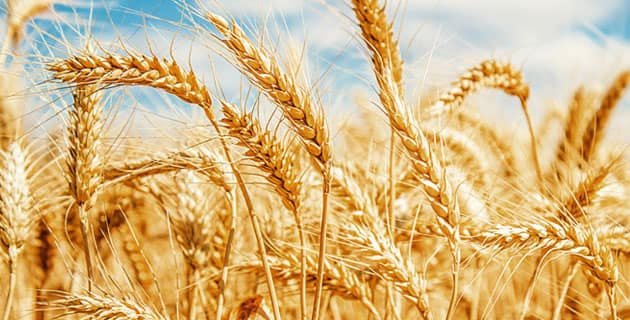 Tarım Ülkesi Türkiye, AB'den 90 bin ton buğday almak üzere ihale açtı!