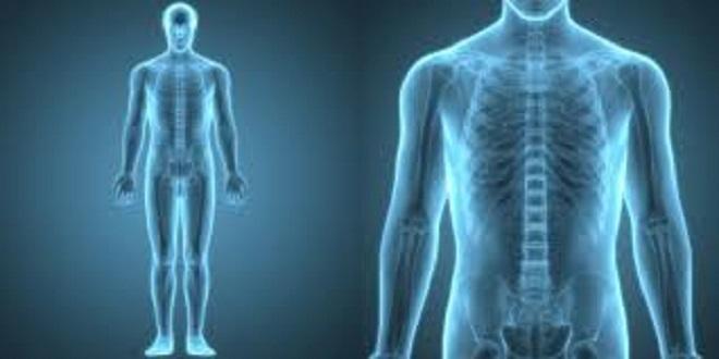 İnsan sindirim sisteminde gizlenmiş yeni bir organ keşfedildi