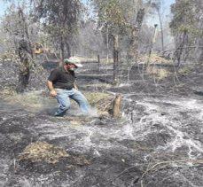 IŞİD, Musul ormanlıklarını yaktı